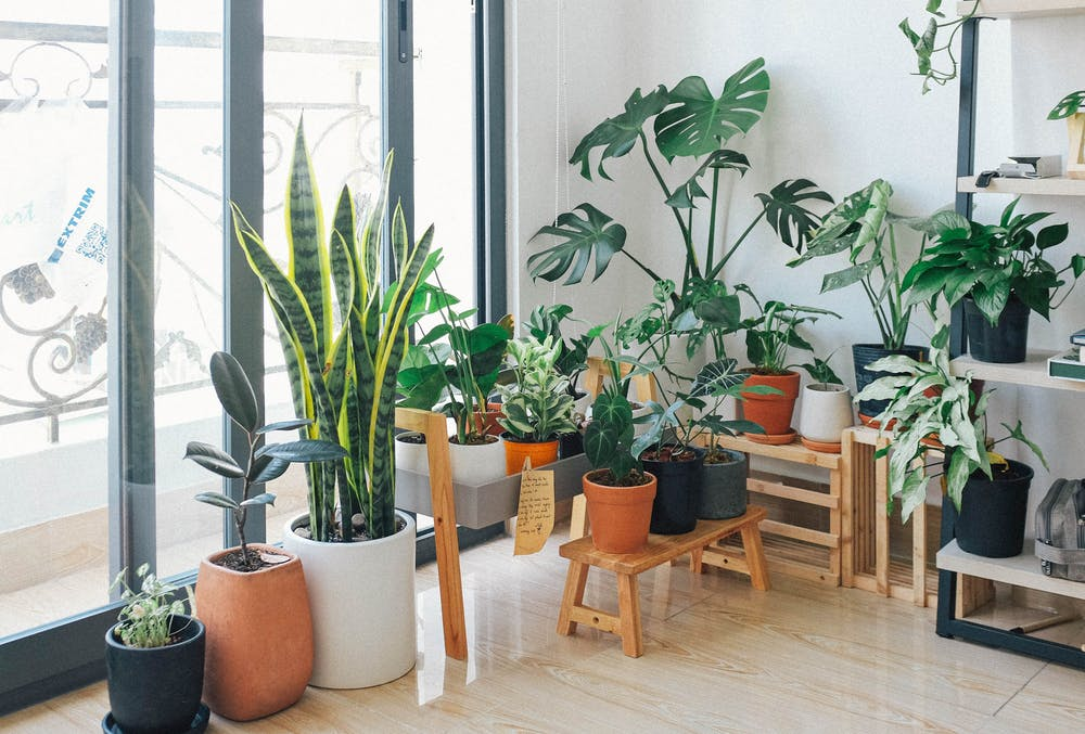 houseplants - How Home of HousePlants was able to expand nationally through Outsourced Bookkeeping